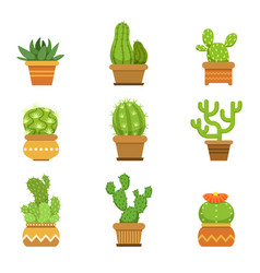 botany decorative plants in pots cactus with vector image vector image