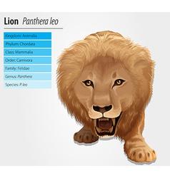 Lion - pathera leo vector