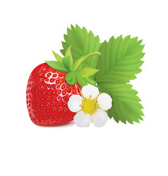 Strawberry with leaves and flower vector