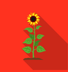 sunflower icon flat single plant icon from the vector image