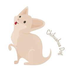 Chihuahua isolated on white background vector image vector image