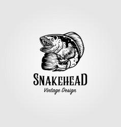 Channa snakehead fish vintage logo design vector