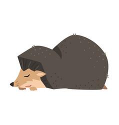 Cute hedgehog sleeping adorable prickly wild vector