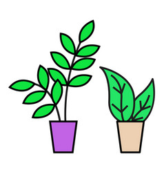 house plant in pots green foliage decor for home vector image