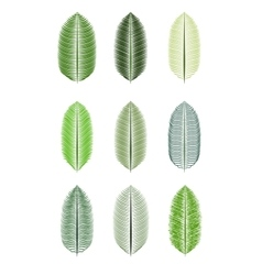 Palm Leaf Isolated vector