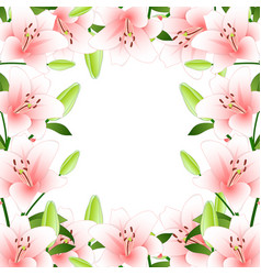 Pink lily border on white background vector
