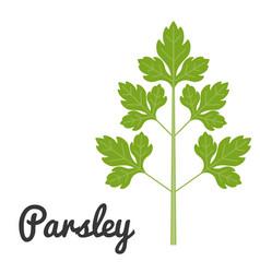 Set of vegetable parsley vector