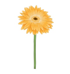 yellow gerbera with watercolor effect isolated vector image