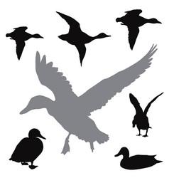 Ducks collection vector
