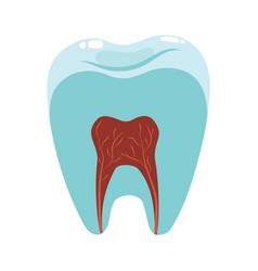 A healthy tooth in a cut hygiene oral vector
