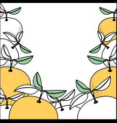 Background with color sections of orange fruits vector
