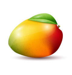 mango on white background vector image