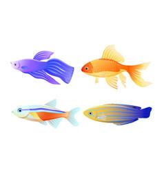 Nautical fish specie color vector
