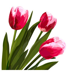 Watercolor beautiful tulips flowers vector