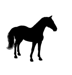 silhouette of a standing horse vector image