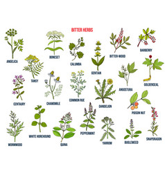 Bitter herbs collection vector