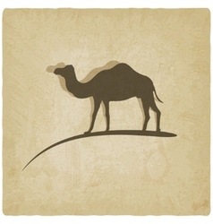Camel old background vector