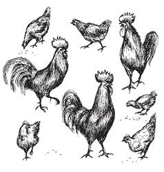 cock sketch vector image