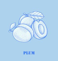 fresh juicy plum vector image