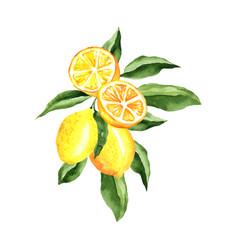 Lemons watercolor composition arrangement design vector