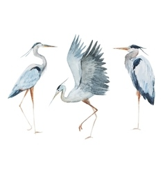 Watercolor heron birds vector image