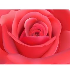 dark pink rose vector image vector image