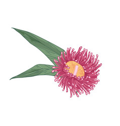 Blooming bright eucalyptus flower with leaves vector