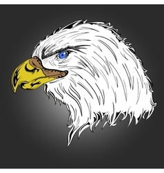 Colored eagle vector