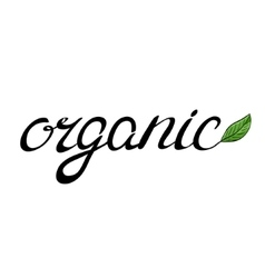 Handwritten word organic with a green leaf vector
