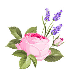 Label with rose flowers vector