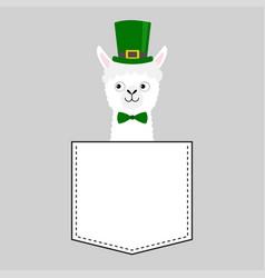Llama alpaca face head in pocket green hat vector