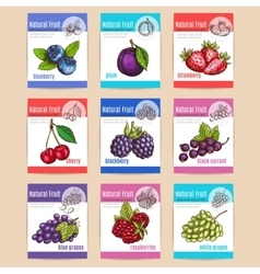 Natural fruits and berries posters vector