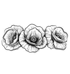 poppy flowers graphic vector image