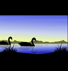 silhouette of swan on river scenery vector image