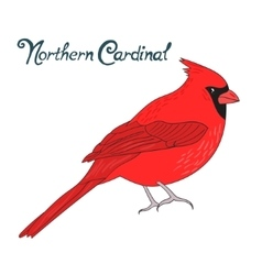 Bird northern cardinal vector