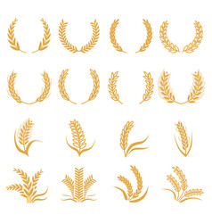 silhouette of wheat corn symbols isolated vector image vector image