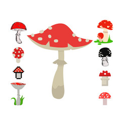 amanita mushrooms dangerous set poisonous vector image