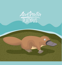 Australia platypus poster in colorful outdoor vector