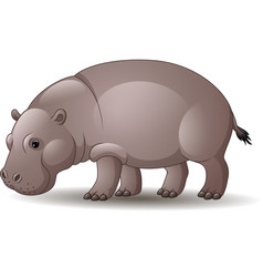 cartoon funny hippo isolated on white background vector image