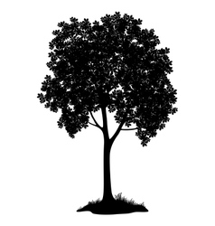 Chestnut tree silhouette vector image