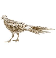 Engraving antique pheasant female vector