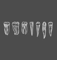 engraving vintage tooth vector image