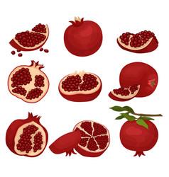 flat set of sliced and whole pomegranates vector image