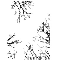 Grunge Branches Frame vector image