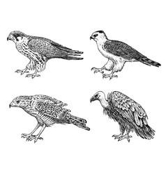 set wild birds goshawk griffon vulture vector image