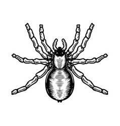 Spider in engraving style halloween theme design vector