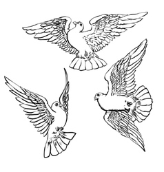 Three flying doves sketch set vector image
