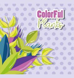 colorful plants design vector image