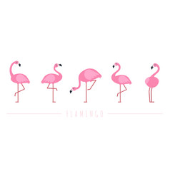 pink flamingo exotic tropical birds characters vector image