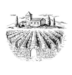 Rows of vineyard grape plants and house vector